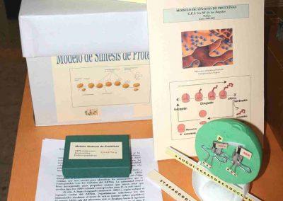 modelo-sintesis-proteina